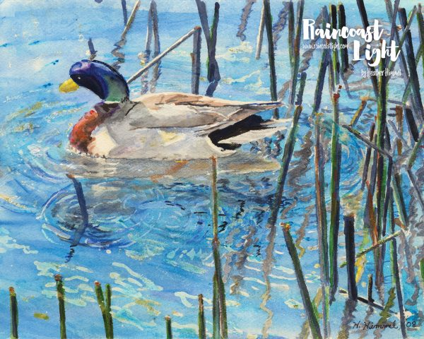 Watercolour painting of a mallard swimming among the tall grasses in a lake