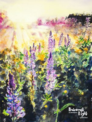 Watercolour painting of a lupin filled meadow backlit by the setting sun