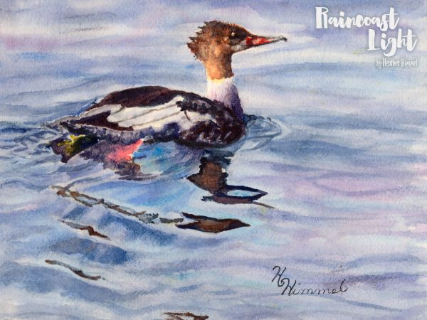 Acrylic paining of a beautiful Merganser floating in water