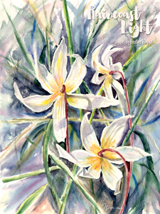 Watercolour painting of lilies by Heather Himmel